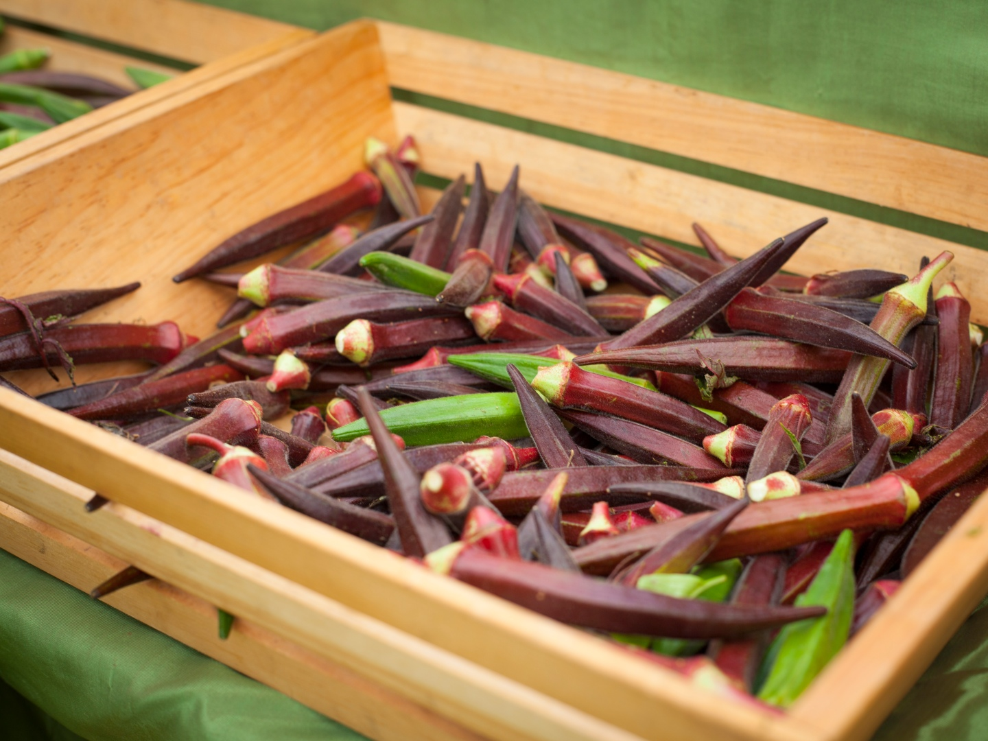 purple okra.jpg