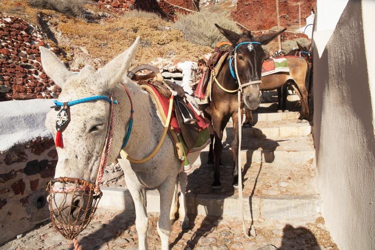 Ammoudi Bay donkeys
